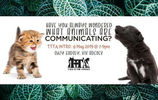 VA - TTTA INTRO MAY 2019 - v2