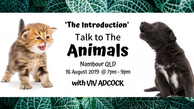 Talk To The Animals – Intro