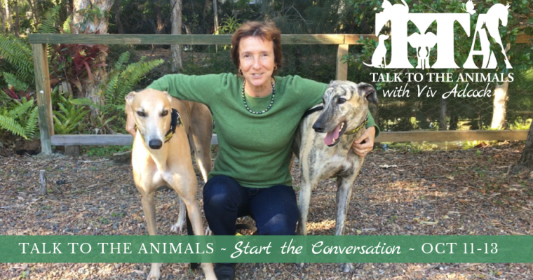 Talk To The Animals – Start The Conversation