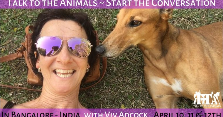 Talk To The Animals – Start The Conversation – India